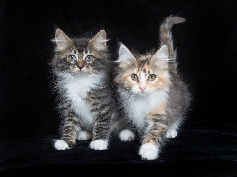 kitten adoptions from Williamson County Animal Center