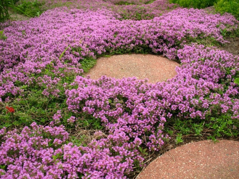 5 Best Ground Covers And How They Can