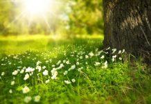 OBITUARY OUTSIDE FLOWERS