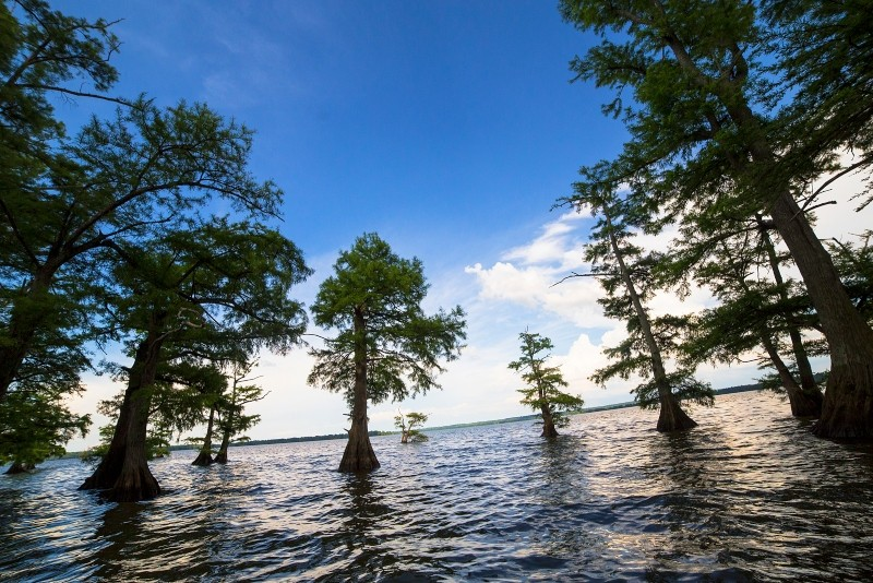 Reelfoot Lake State Park in Tiptonville, Tennessee.